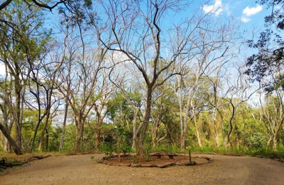 Lote Del Rey 15 – Small Natural Lot at Playa Tamarindo