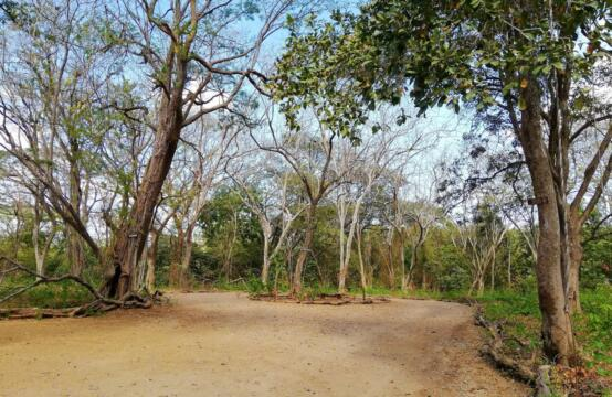 Lote Mar Y Selva – An ensemble of 4 individual lots, only steps from Tamarindo beach
